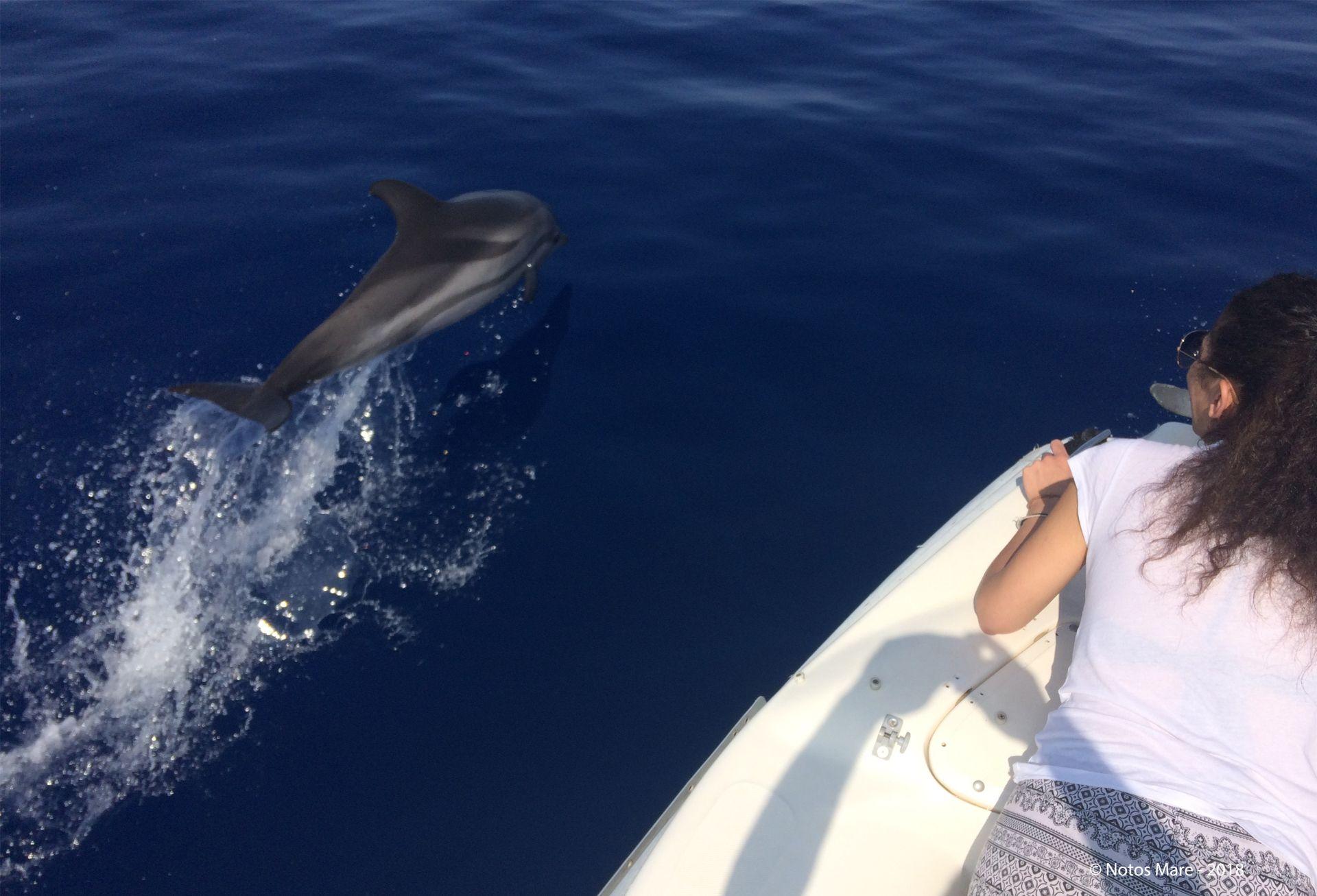 Evenos_Travel_gorges_coastlines_tastes_gavdos_boat_trip_dolphins