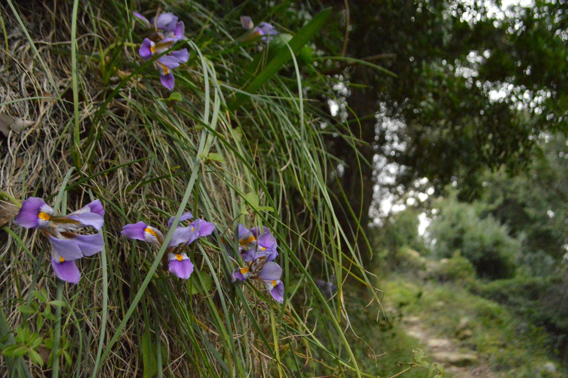 Margarites valley
