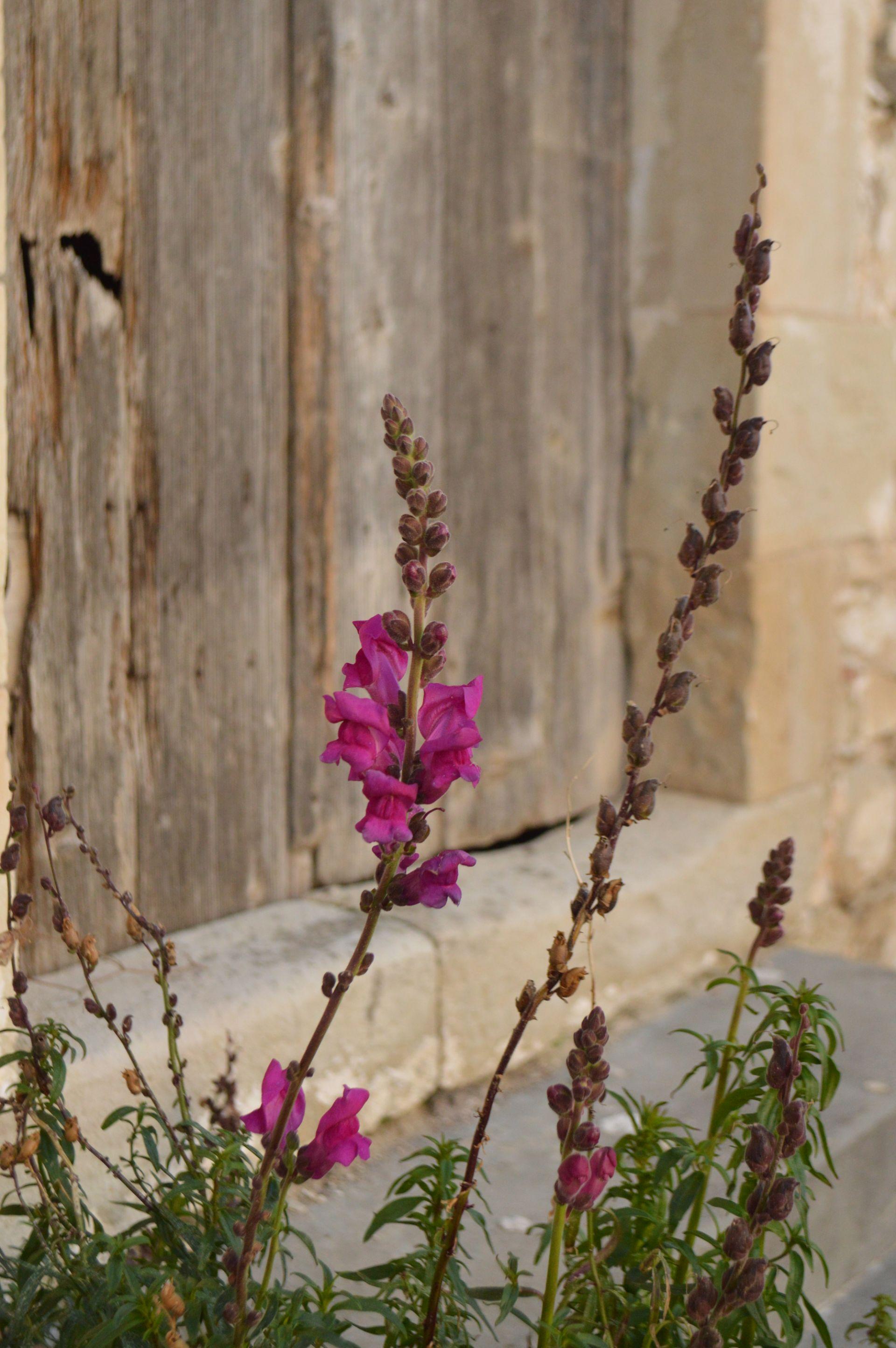 Margarites_Ancient Eleftherna